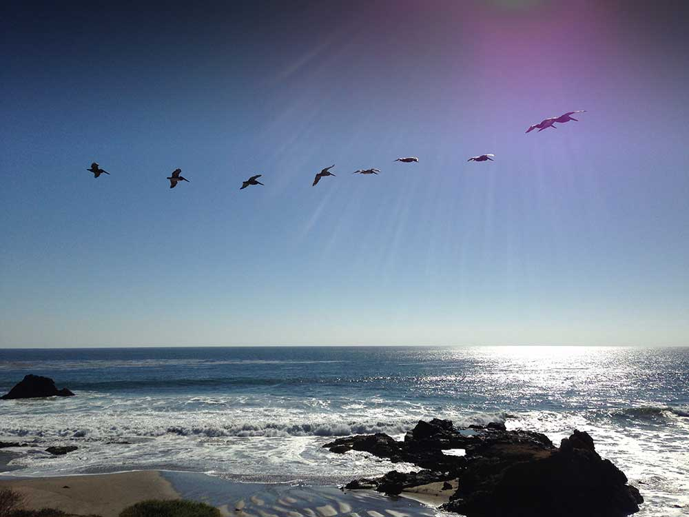 Stephanie Riseley -Pacific Ocean Pelicans